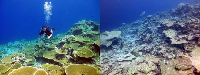 comparison of reef health at Ile Anglais reef. Salomon Atoll. BIOT