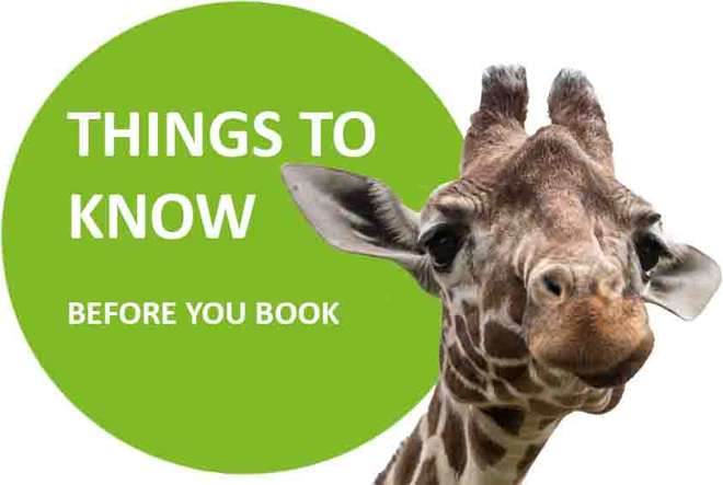 Know Before You Book Meet the Giraffes