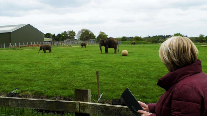 Observing elephants with ZSL ZD Research