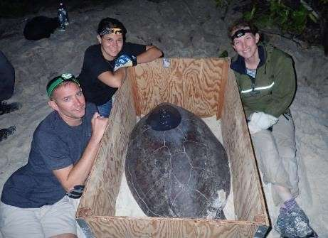 Volunteers assisting with tagging green turtle. DG, BIOT. Nicole Esteban