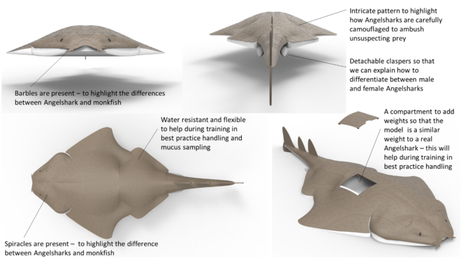 let me introduce you to angwen the angelshark zoological society Sliding Door Gate illustration of an angelshark