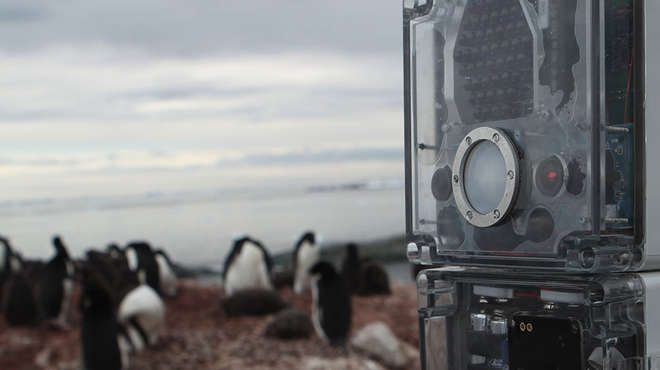 Camera tapping tool penguins