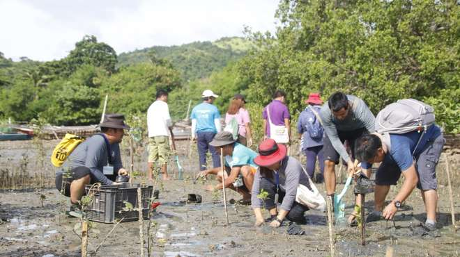 ToT participants practice mangrove outplanting in Pedada Mangrove Ecopark, Iloilo.