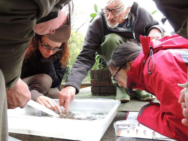 Volunteers being trained in the RMI sampling method on the River Hogsmill