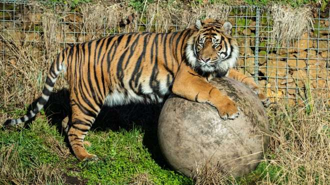Asim explores his new home at ZSL London Zoo