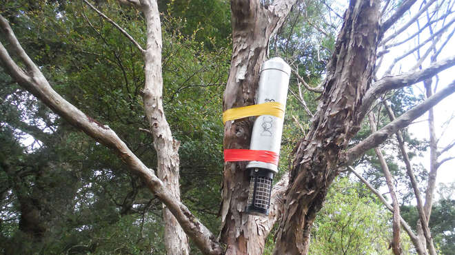 Close-up of a recording device attached to a tree-trunk with sturdy tape.
