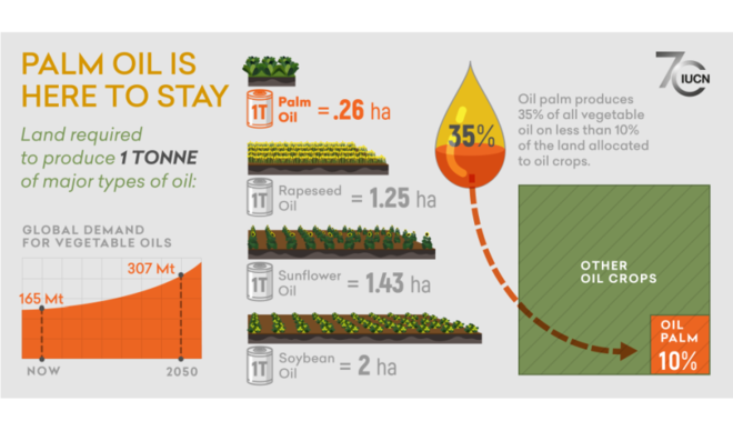 Infographic showing the land required to produce 1 tonne of palm oil compared to rapeseed, sunflower and soybean oil.