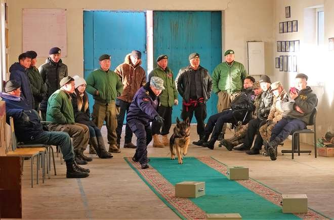 Border detector dog scent detection training ZSL Mongolia