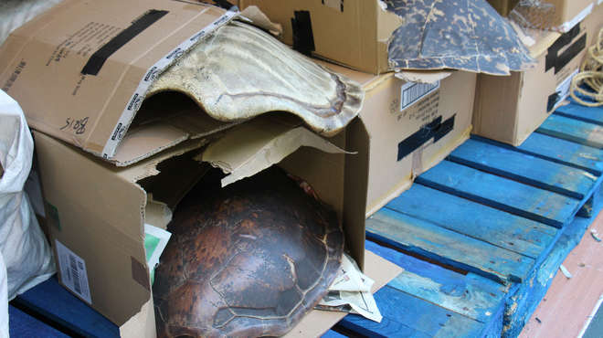 Photograph of Tortoise shells in boxes inside a shipping container