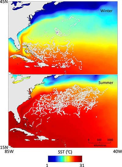 Data generated image showing location of sharks in relation to temperature