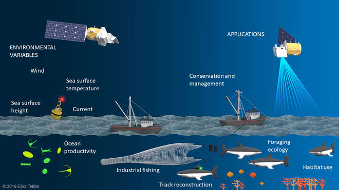 Illustration showing the different components of remote sensing and the species they monitor