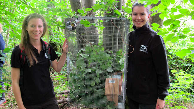 Photo of 2 members of the DRAHS team either side of the wire release cage with the dormice nest boxes visible inside