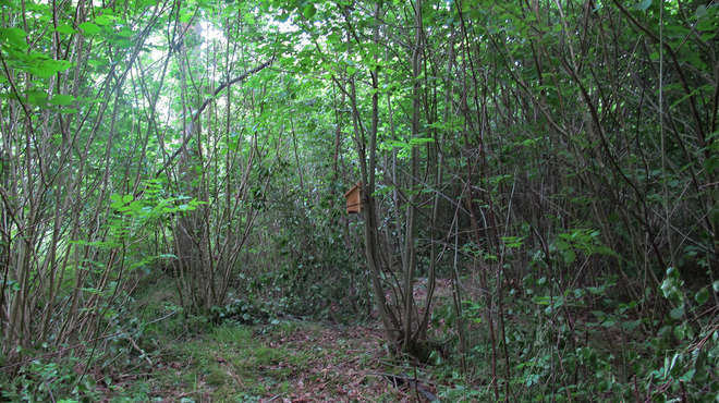 Photo of a woodland area with a dormouse nestbox attached to a small tree.