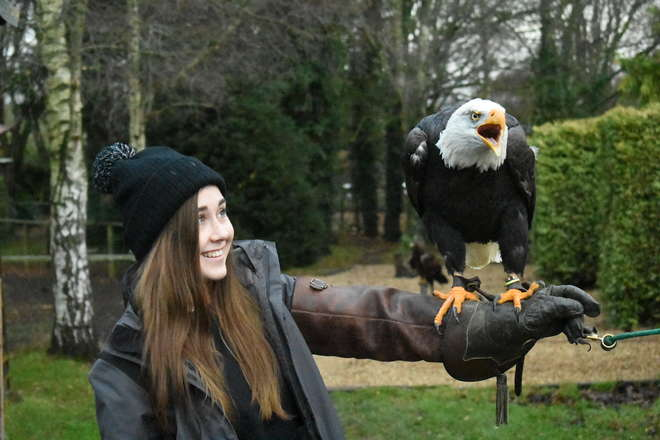 A student of the Wild Animal Biology Master course holding an bald eagle