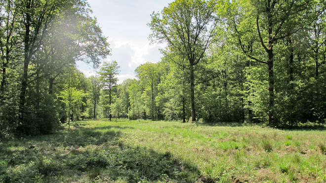 Photo of a small area of wild meadow surrounded by trees.