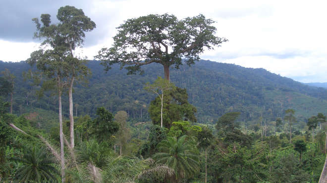 Landscape photo looking across a valley covered with tropical forest