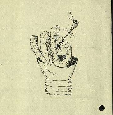 Drawing of hand holding a flower by Desmond Morris