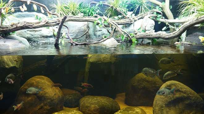 Threatened rivers of Magascar tank in the Aquarium at ZSL Whipsnade Zoo