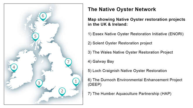 Map showing Native Oyster restoration projects in the UK & Ireland