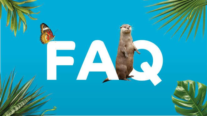 FAQ icon on blue background