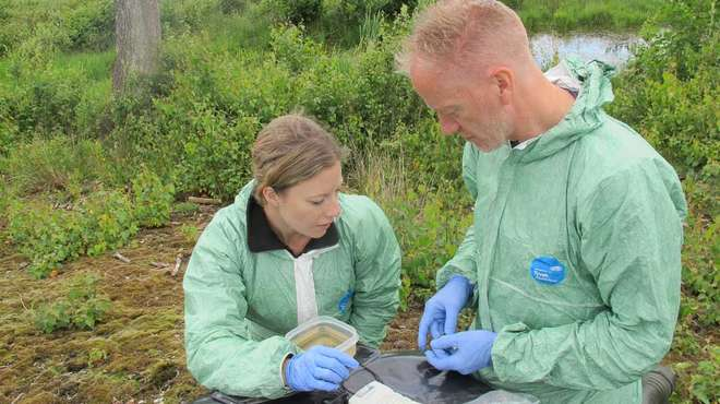 Photo - DRAHS wildlife vets Dr Tony Sainsbury and Dr Tammy Shadbolt carrying out health examinations on pool frogs out in the field