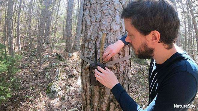 Photo - Close up photo of a conservationist attaching a camera trap to a tree in a forest