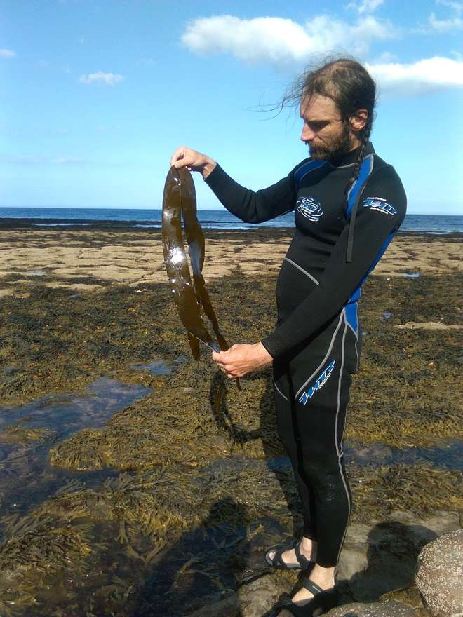 photo - Chris examines a long piece of seaweed on the seashore