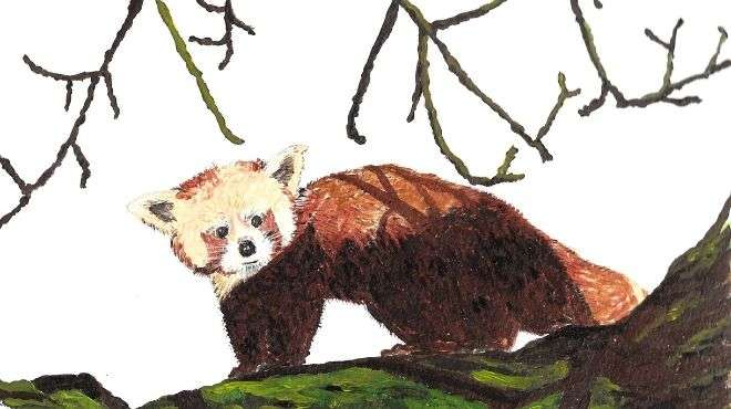 Painting of red panda at Whipsnade