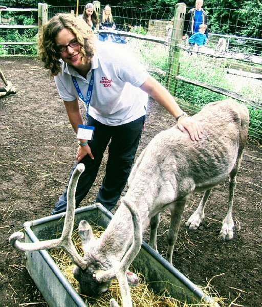 London Zoo Volunteer Fiona standing with one of our reindeer
