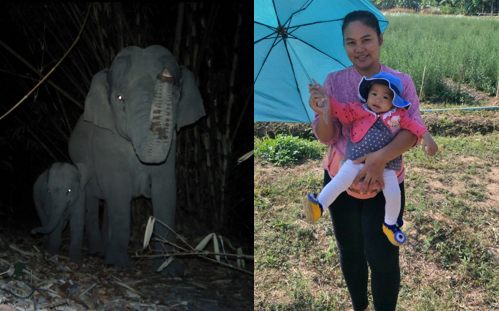 Gib & Ma Faeung with a picture of a mother and baby elephant