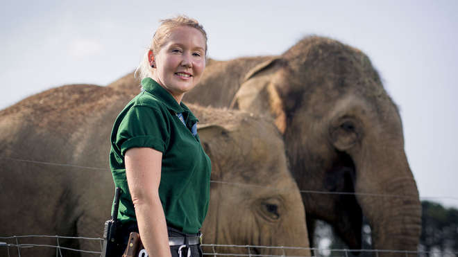 Zookeeper poses with elephants