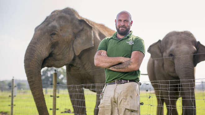 Male zookeeper stands in front of elephants at Whipsnade