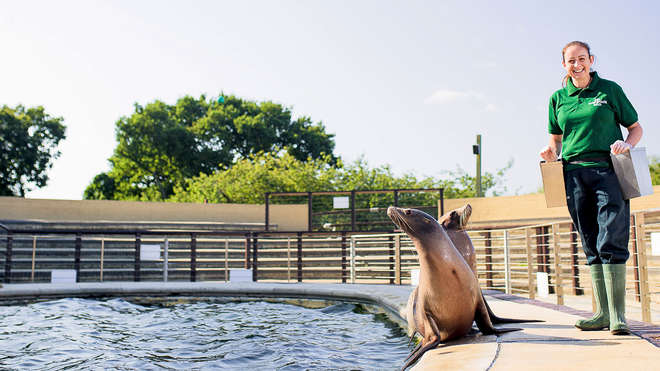 zookeeper with two sealions at Whipsnade Zoo
