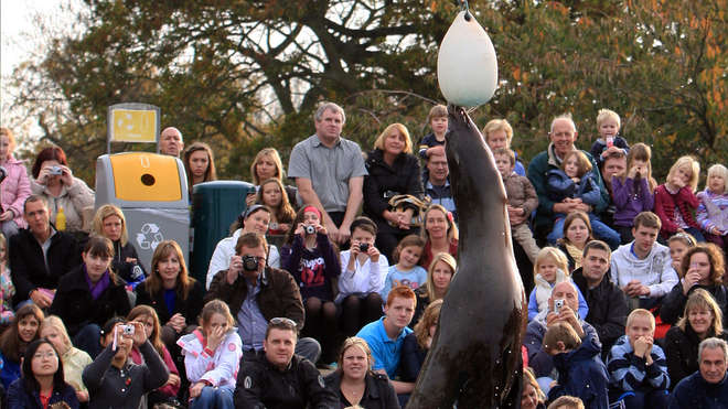 Sea lion demonstration at ZSL Whipsnade Zoo