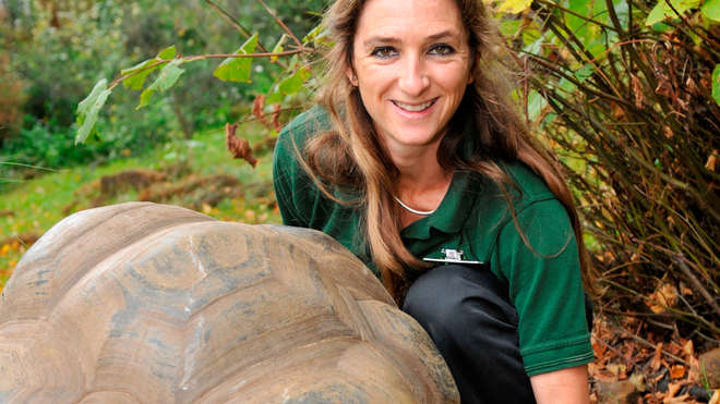 Giant Galapagos tortoise has a check  up with vet Tai Strike at ZSL London Zoo